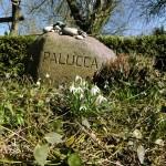 Grab Palucca